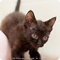 Adopt A Pet :: Alfredo - Fountain Hills, AZ