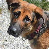 Adopt A Pet :: Sofie - Athens, GA