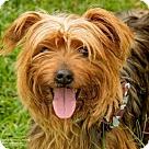Adopt A Pet :: Meadow
