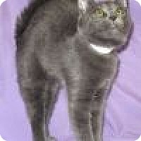 Adopt A Pet :: Ezzy - Powell, OH