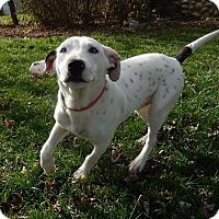 Adopt A Pet :: Solomon - Alexandria, VA