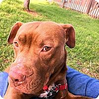 Adopt A Pet :: Pocket - Berkeley, CA