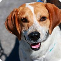 Adopt A Pet :: Rescue Sam - Batavia, NY