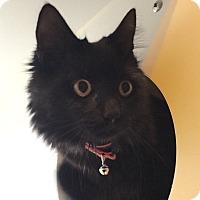 Adopt A Pet :: Mister - Nashville, TN