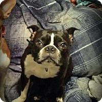 Adopt A Pet :: Orson - Chambersburg, PA