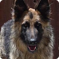 Adopt A Pet :: Faye - San Diego, CA