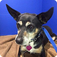 Adopt A Pet :: Jack - Renton, WA