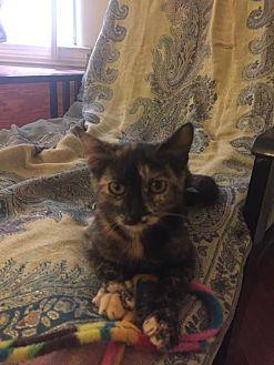 Domestic Shorthair Kitten for adoption in Los Angeles, California - Artemis *Funloving Foursome*