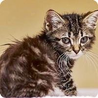 Adopt A Pet :: Clancy, Tiny  $20 - Lincolnton, NC