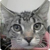 Adopt A Pet :: Gronk - Trevose, PA