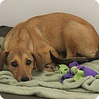 Adopt A Pet :: Beasley #936 - Nixa, MO