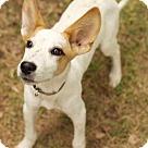 Adopt A Pet :: Dexter Two