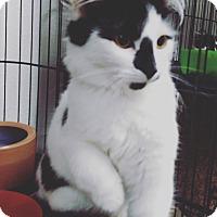 Adopt A Pet :: Cher - Hallandale, FL