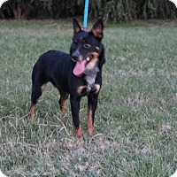 Adopt A Pet :: Viola - Fort Atkinson, WI