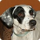 Adopt A Pet :: Katherine Hepburn