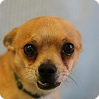 Adopt A Pet :: Elvis - Roosevelt, UT