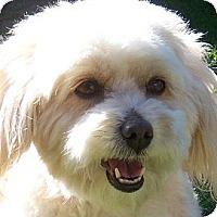 Adopt A Pet :: Mimi - La Costa, CA