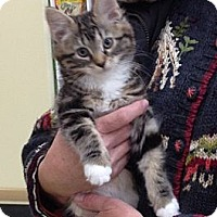 Adopt A Pet :: Winnie - Troy, OH