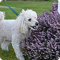 Adopt A Pet :: Clyde - Tumwater, WA