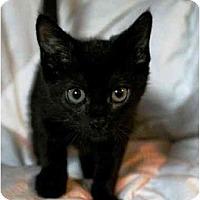 Adopt A Pet :: Mabel - Irvine, CA