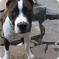Adopt A Pet :: Smoochie - San Francisco, CA