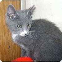 Adopt A Pet :: Vivian - Colmar, PA