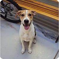 Adopt A Pet :: Jake Henry - Phoenix, AZ