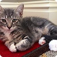 Adopt A Pet :: Azalea - St. Louis, MO