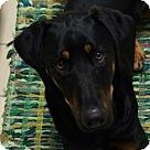 Adopt A Pet :: Bonsai