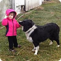 Adopt A Pet :: Kaylan - Prole, IA