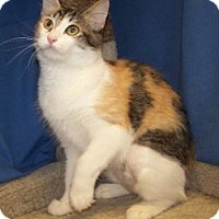 Adopt A Pet :: Apple - Colorado Springs, CO