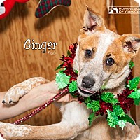 Cattle Dog Dog for adoption in Fort Mill, South Carolina - Ginger