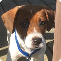 Adopt A Pet :: Glen - Staunton, VA