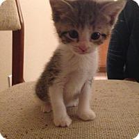 Adopt A Pet :: Slater (2/15/15) (JP) - Orlando, FL