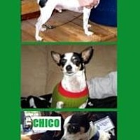 Adopt A Pet :: Chico - Scottsdale, AZ