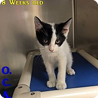 Adopt A Pet :: Petco 2 - Triadelphia, WV