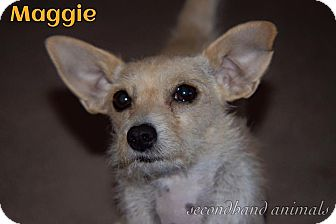 Terrier (Unknown Type, Small) Mix Dog for adoption in Rosamond, California - Maggie