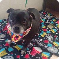 Adopt A Pet :: Maylo - San Diego, CA