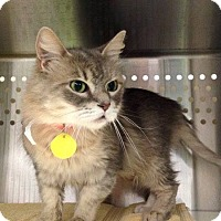 Adopt A Pet :: Scruffy - THORNHILL, ON
