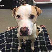 Adopt A Pet :: Solstice - Avon, OH