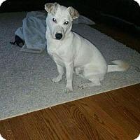 Adopt A Pet :: Charlie (Courtesy Post) *$50 adoption fee* - Newark, DE