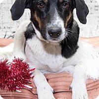 Adopt A Pet :: 957- Bea - Aurora, CO