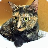 Adopt A Pet :: Bonnie *Petsmart GB* - Appleton, WI
