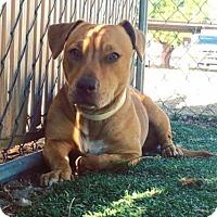 Adopt A Pet :: Teagan - Peoria, AZ