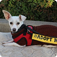 Adopt A Pet :: Larry - Yuba City, CA