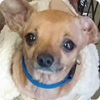 Adopt A Pet :: waffles - Anderson, SC