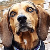 Adopt A Pet :: Megan - Clarksville, TN