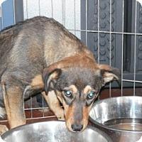 Adopt A Pet :: Cheeto - Clarksville, AR