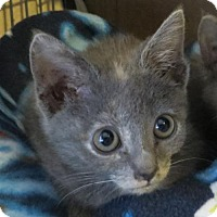 Adopt A Pet :: .Dust - Ellicott City, MD