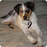 Adopt A Pet :: Lexi - Cleveland, OH